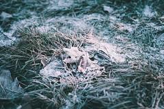 frostig (clearfotografie) Tags: fujixt2 fujinionxf23mmf14 nature natur outdoor leaves blätter