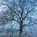 Resting Tree