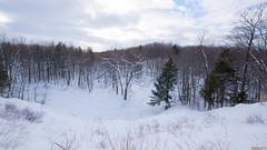 Hiver, winter - Parc de l'escarpement - Québec, Canada - 9273 (rivai56) Tags: hiver winter parcdelescarpement québec canada 9273 tapis « épais » blanc dans le parc de la ville park