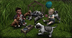 Toutou's and Co (Fraisecassis) Tags: dog puppy kids child toddleedoo baby play grass rezz room
