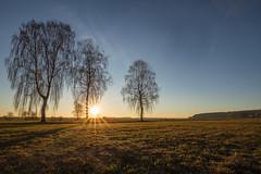 Birch sunrise 2 (Sebo23) Tags: birch birke sonnenaufgang sunrise sonnenstrahlen sonne sunbeams sun sunstar sunrays licht landscape landschaft light lichtstimmung gegenlicht nature naturaufnahme natur morgenstimmung morninglight canon6d canon16354l