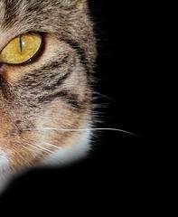 Cat's Eye (Foxie Foxxo) Tags: animal cat pet eye sunlight sun cute shadow black gold samsung light dark home animals pets kitty macro upclose gato chat kat noir soleil zonneschijn huis casa ombre sombra