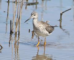 F_031719a (Eric C. Reuter) Tags: birds birding nature widlife nj forsythe nwr march 2019 refuge 031719