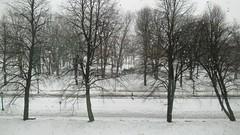 Let It Snow! Let It  Rain! Let It Snow! (Robert Saucier) Tags: québec quebeccity plainesdabraham mnbaq musée museum fenêtre window vitre glass cristal arbres trees neige snow pluie rain raindrops gouttes personne people img5265 vudenhaut plongée