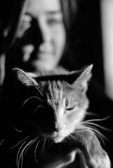 princess and her sister (Paul Lundberg) Tags: nikonfe2 nikkor50mmf14ais kodaktrix400 kodakd76 plustekopticfilm7300 film 35mm blackwhite cat