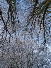 Watlington Hill (Bruce Clarke) Tags: olympus landscape nt outdoor cold trees beeches m43 branches 714mmf28 oxfordshire dusk nationaltrust winter thamesvalley omdem1 watlingtonhill chilterns snow sunset