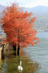 Anatre (Maria Teresa D) Tags: lago acqua paesaggio alberi rosso autunno papere natura