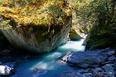20190207-49-River bend (Roger T Wong) Tags: 2019 nz newzealand rogertwong sel24105g sony24105 sonya7iii sonyalpha7iii sonyfe24105mmf4goss sonyilce7m3 southisland westmatukitukivalley bend blue bushwalk erosion glacial hike landscape outdoors river tramp trek walk