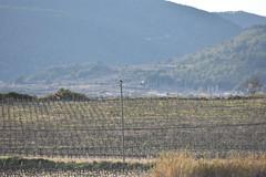 Pareja de rapaces (esta_ahi) Tags: penedès aves rapaz rapinyaire fauna vinya viña viñedo vineyard vitisvinifera calmiret santmartísarroca barcelona spain españa испания