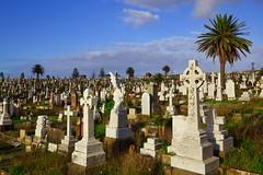 Sydney 2019 IMG_7522.CR2 (Daniel Hischer) Tags: australia cemetery clovelly coastalwalk easternsuburbs landscape landscapes sydney waverleycemetery