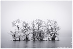 190302 030web (Marteric) Tags: sandared viaredssjön lake sweden winter ics fog foggy mist misty trees tree nature outdoor seascape borås black white bw
