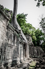 Ready to walk (Cédric Nitseg) Tags: nikon asie siemreap taprohm greelow travelling backpacking backpacker tree travel cambodge arbre voyage d7000 asia temple cambodia