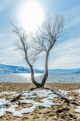 Beach Walk-2 (melbaczuk) Tags: kelowna gyro beach okanaganlake okanagan kelownabc winter lake kelownanow exlorebc canon canon5dmark4