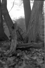 kw005 (salparadise666) Tags: nils volkmer medium format analogue vintage film camera kw patent etui rollex back bw black white monochrome vertical folding lower saxony woods forest germany