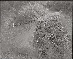 GW670 (又见|PENG) Tags: fomapan fuji film 6x7 blackandwhite gf670