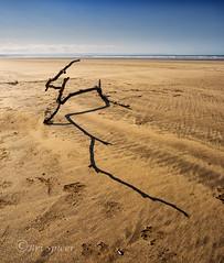 Shadow play (Through Bri`s Lens) Tags: northdevon sauntonbeach driftwood beach washedup ashore sand sky sun brianspicer canon5dmk3 canon1635f4