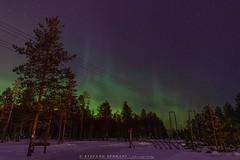 Fire o northern lights? (stefano.sedrani1) Tags: fullframe night forest colors scandinavia beautiful scenery light longexposure frozen snow northernlights winter nikond850 nikon finland lapland landscape nature