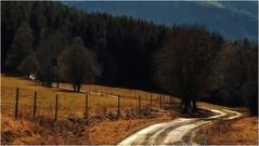 Der verschlungene Weg (linke64) Tags: thüringen deutschland germany gegenlicht natur nadelbäume landschaft licht wald weg waldweg wiese bäume baum berge