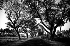 road to Mysore.India (VincenzoMonacoo) Tags: canon 6d tamron 2470 india karnataka kerala trivandrum hampi road travel adventure leica nikon