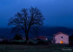 L'heure bleue (Tormod Dalen) Tags: smcpentaxm5014 blue bleu campagne silhouette countryside couleurs colors bluehour heurebleue arbre tree