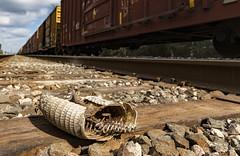(o texano) Tags: houston texas trains freights nature death armadillo