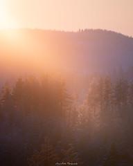 Mountain View (laurilehtophotography) Tags: suomi finland jyväskylä kanavuori mountain forest sunset sun light nature landscape telephoto nikon d750 nikkor 200500mm outdoor winter winterwonderland shadow auringonlasku talvi metsä view cold amazing earth