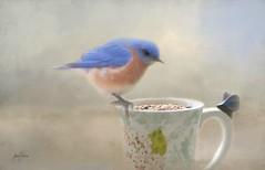 Eastern Bluebird.... (Patlees) Tags: easternbluebird nc cup textured dt