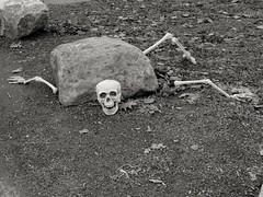 long passed help (Bluescruiser1949) Tags: dead skeleton rocks bw bones gag