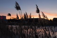 Golden Hour (makkus1996) Tags: golden hour cold winter warm sun sunset sky nature sea frozen snow orange blue