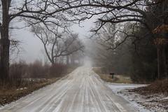 February Fog, Country Road (marylea) Tags: feb7 2019 fog winter rural road ruralroad washtenawcounty foggy mist misty atmospheric