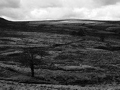 thetree1 (olveres) Tags: hiking legacy glass olympus omd canon fd oxenhope black white bw westyorkshire