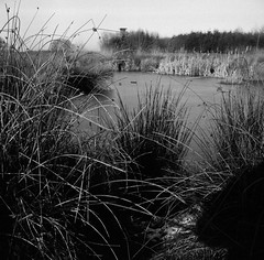 Frozen (Rosenthal Photography) Tags: fomapan400 dezember epsonv800 landschaft mittelformat ff120 januar analog schwarzweiss asa400 rodinal15021°c11min winter zeissikonnettar51816 20190201 frozen january pond landscape mood trees grass field zeiss ikon nettar 51816 75mm f45 fomapan rodinal 150 epson v800