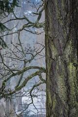 """""""Bark""""ing up a beautiful tree. (SpyderMarley) Tags: lichen douglas fir evergreen bark moss winter saanich farm backyard mature texture"""