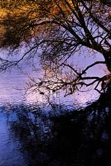 Riverside (Fr Paul Hackett) Tags: river tree bank ripple shadow sunshine winter