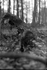 (salparadise666) Tags: nils volkmer medium format analogue vintage film camera kw patent etui rollex back bw black white monochrome vertical folding lower saxony woods forest germany