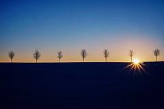 Symmetric nature (_SinaColada_) Tags: romantic beautiful beauty bäume trees symmetrie symmetric landschaft landscape outside nature 35mm ilce6000 alpha sony sonnenuntergang sonne sunset sun