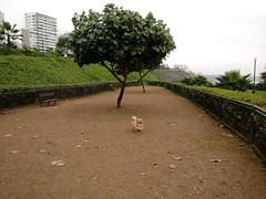 Lima - Canil de Miraflores (Santiago Stucchi Portocarrero) Tags: miraflores lima perú santiagostucchiportocarrero roni perro can cane dog hund hound chien