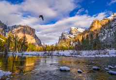 """Glorious""  Yosemite National Park, CA, Valley View from the Merced River with EL Capitan, Cathedral Rocks, and Bridalveil Falls (Cathy Lorraine) Tags: yosemite nationalpark california mountains sky trees landscape river forest rocks snow winter water raven bird nature outdoors sunlight clouds reflections frozen sun light"