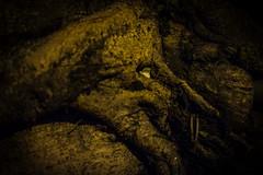 Witch (4stringtraveller) Tags: 나무 마녀 witch 태국 얼굴 thailand illusion urbanjungle streetphotography fujixt1 fuji hiddenface tree bangkok