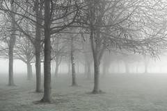 Cold Mist (www.neilburnell.com) Tags: mist fog atmosphere muted tones trees landscape
