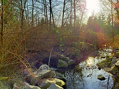 The creek before sunset (walneylad) Tags: loutetpark northvancouver britishcolumbia canada park parkland woods woodland forest urbanforest rainforest trail trees creek rocks green brown gold sun bluesky afternoon spring march nature view scenery reflections branches leaves water stream