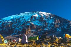 _FOU9670.jpg (Murray Foubister) Tags: 2018 gadventures spring mountainsm flora travel treking africa tanazania