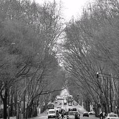 Avenida Liberdade (AlexJ (aalj26)) Tags: aalj26 alexj alexanderaljorge portugal lisboa lisbon liberty avenue avenida liberdade preto e branco black white pb bw alexander jorge europe europa