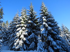 bei Oberhof...da ist Winter! (germancute) Tags: outdoor nature winter wald thuringia thüringen landscape landschaft