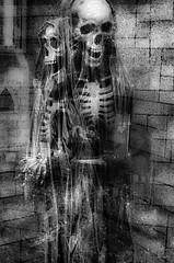 Double Skeletons (bluechromis1) Tags: 35mm adoxsilvermax100film adoxsilvermaxdeveloper davisgraveyard milwaukeeoregon minoltaxd11 blackandwhite fall halloween homedeveloped homesouped monochrome selfdeveloped film analog analogue skeleton scary creepy