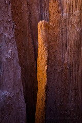Golden Hour in an Eroded Clay Canyon (Jeff Sullivan (www.JeffSullivanPhotography.com)) Tags: eroded slot canyon nevada united states usa american southwest travel landscape nature photography canon eos 5d mark iv dslr digital camera photo copyright april 2019 jeff sullivan cathedral gorge state park lincolncounty