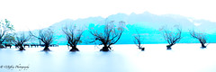 The Seven Sisters of Glenorchy (OJeffrey Photography) Tags: sevensisters glenorchy lakewakatipu southisland newzealand panorama pano highkey stylized impression mountains trees willowtrees willow ojeffreyphotography ojeffrey jeffowens nikon d850
