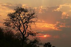 Sunset - Mashatu – Botswana (lotusblancphotography) Tags: africa afrique botswana mashatu nature landscape paysage sunset coucherdesoleil crépuscule ciel sky tree arbre