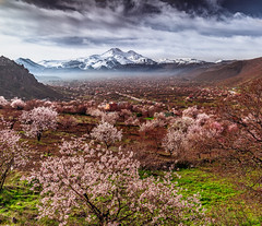 Smell of Spring (BeNowMeHere) Tags: ifttt 500px trip benowmehere blossoms colours flowers fog fuji kayseri landscape nature sakura smell smellofspring trees turkey blooming clouds colors erciyes fruit mountain snow travel range hill peak scenic scenics rock