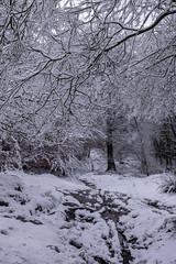 Stanage Plantation (l4ts) Tags: landscape derbyshire peakdistrict darkpeak snow winter stanageedge stanageplantation trees